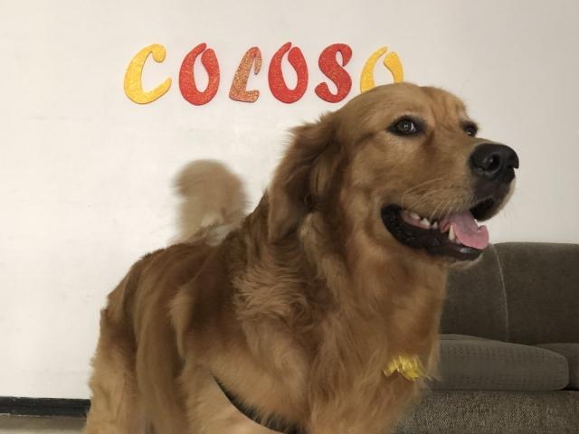 Coloso 3